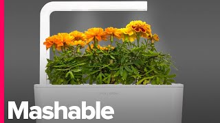 Download Grow Your Favorite Herbs Right in Your Kitchen - Mashable Deals Video