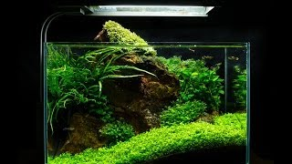 Download Red Rock Nano Aquascape by James Findley Video