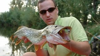 Download Ryby, rybky, rybičky - 23/2014, premiéra 7.11.2014 Video