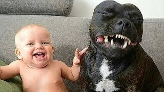 Download Pit Bull Protects Baby Compilation Video