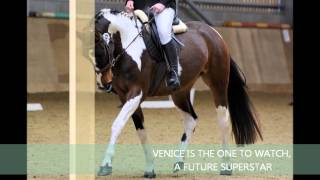 Download VENICE 15 hh skewbald dressage / showing mare for sale in Essex Video