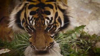 Download Google Photos: Animals Take Selfies at the LA Zoo Video