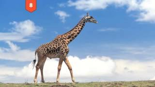 Download 25 Amazing Facts You Didn't Know About Animals Video