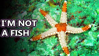 Download Starfish facts: really they're sea stars | Animal Fact Files Video