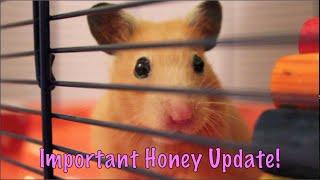 Download Important Honey Update! Video