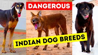 Download 9 Dangerous Dog Breeds That Indians Still Keep as Pets Video