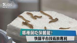 Download 哪種菌吃保麗龍?快篩平台技術拚專利 Video