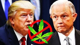 Download Trump Administration Coming For Your Weed Video