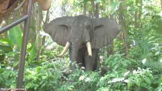 Download Jungle Cruise (Full Ride) Disney World's Magic Kingdom Video