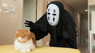 Download 고양이 앞에 가오나시가 나타났을 때 반응 Video