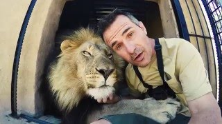 Download Gabby and Bobcat Get EXCITED!! | The Lion Whisperer Video