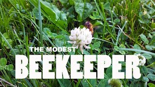 Download The Modest Beekeeper - A Documentary Video