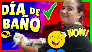 Download 🛀¿Cómo bañar a una COBAYA de pelo largo?💦🐹BAÑANDO A JACKIE ✅Toca Ducha [OK] Video