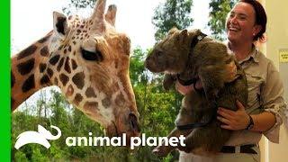 Download Meet The Mischievous Animals of Australia Zoo! Video