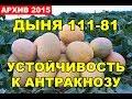Download Выращивание овощей. Дыня 111-81, устойчивость к Антракнозу Video