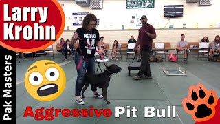 Download Extremely aggressive pit bull real time training at workshop Video