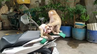 Download Monkey Baby Nui | NUI Monkey comes to Monkey PON's house to play. Two children playing in the wild a Video