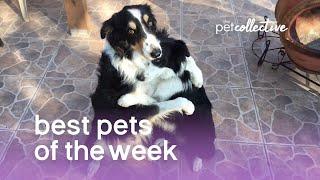 Download Best Pets of the Week | March 2018 Week 1 Video