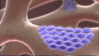 Download The World of Biophysics Video