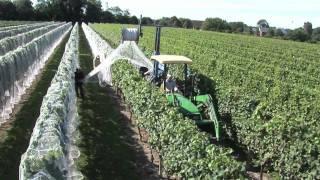 Download Newport Vineyards Grape Harvest Video