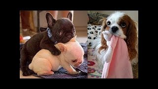 Download Funny baby animals Videos Compilation Funny moment of the animals Video