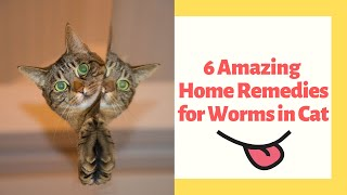 Download 6 Amazing Home Remedies for Worms in Cat Video