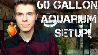 Download I Set Up a 60 Gallon Aquarium + Tour! Video