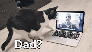 Download Video Сhat. The cat is looking for Daddy Video
