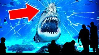 Download Why No Aquarium In the World Has a Great White Shark? Video
