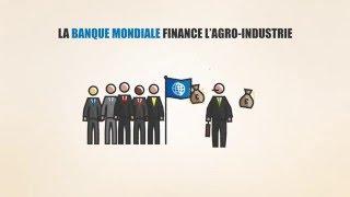 Download La participation de la Belgique à la Banque mondiale – vidéo pédagogique Video