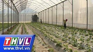 Download THVL l Khoa học nông nghiệp: Nhà lưới giá rẻ - Giải pháp kinh tế nâng cao chất lượng rau màu Video