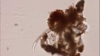 Download Micronaturaleza II Moviéndose Video