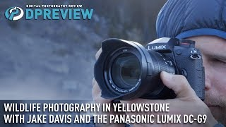 Download Wildlife photography in Yellowstone with Jake Davis and the Panasonic Lumix DC-G9 Video