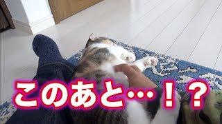 Download だる絡みすると子猫たちに嫌われる寂しい動画 Video