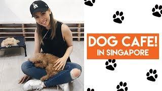 Download We Visit a Dog Petting Cafe! Singapore Vlog Video
