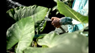 Download Landscape Film: Roberto Burle Marx – Official Trailer Video