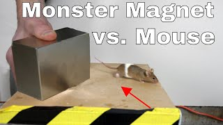 Download What Does a Giant Monster Neodymium Magnet do to a Mouse? Video