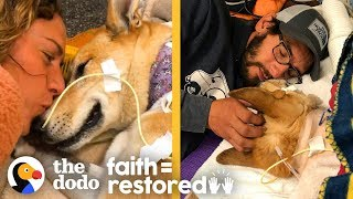 Download Dog Survives Car Hit and Proves Miracles Exist | The Dodo Faith = Restored Video