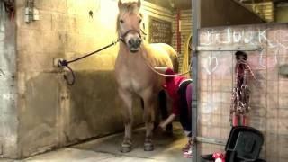 Download ″Mijn paard & ik″ Video