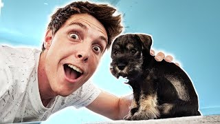 Download I GOT A NEW PUPPY! Video