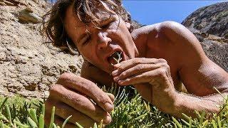 Download PRIMITIVE WILD SURVIVAL FOOD: Six Edible Coastal Plants Video