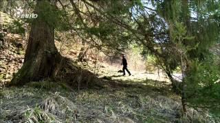 Download 山貓要回家 (HD) Video