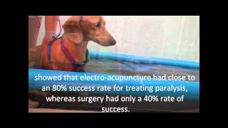 Download Elan with amazing recovery from paralysis using electroacupuncture acupressure and rehabilitation Video