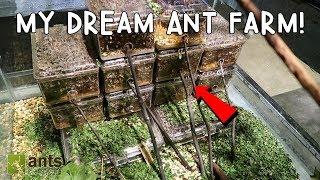 Download MY DREAM ANT FARM: LEAFCUTTER ANTS! Video
