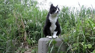Download 【地域猫】体重8kgの巨猫が釣り場に来て、好き勝手やり放題する動画。【魚くれくれ野良猫製作委員会】 Video