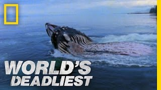 Download Giant Jaws of Death   World's Deadliest Video