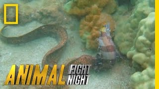 Download Savage Sea Stalker | Animal Fight Night Video