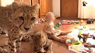 Download Wild Baby Animals Are Being Sold As Pets | The Dodo Video