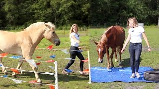 Download 5 SIMPELE GOEDKOPE HORSE AGILITY OBSTAKELS! Video