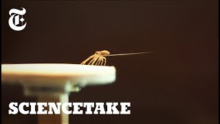Download How Spiders Use Silk to Fly | ScienceTake Video
